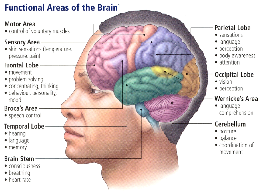 the many theories explaining how memory can be improved Cognitive load theory states that traditional instructional techniques can overload working memory because they don't account for intrinsic and extraneous load instructional designers can facilitate learning by considering and accommodating different loads.